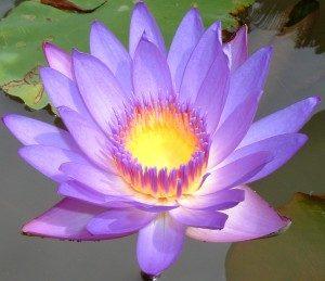 jamie-rizzo-mft-intern-lotus-flower